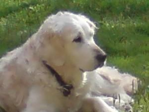 Nadja 2009-07-06